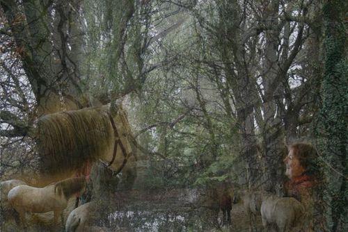 Aufstellungen mit pferden